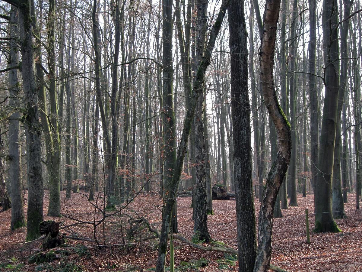 255-477, Z, 9-2-2011, NL-Marco van Hummel, 52.16561 NB-6.51484 OL,  Dinkelland.jpg