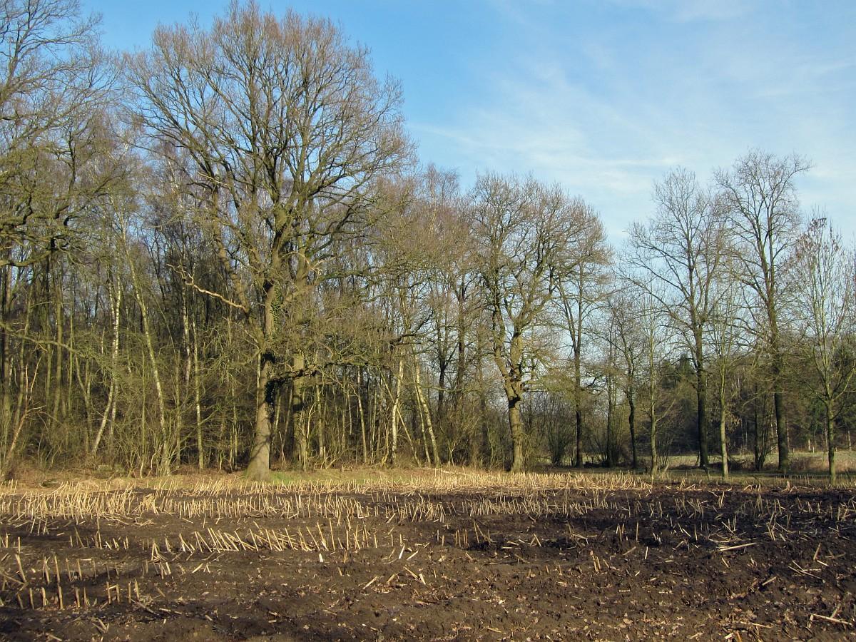 256-477, O, 9-2-2011, NL-Marco van Hummel, 52.16568 NB-6.52469 OL,  Dinkelland.jpg