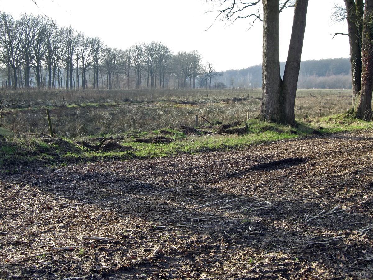 256-477, W, 9-2-2011, NL-Marco van Hummel, 52.16568 NB-6.52469 OL,  Dinkelland.jpg