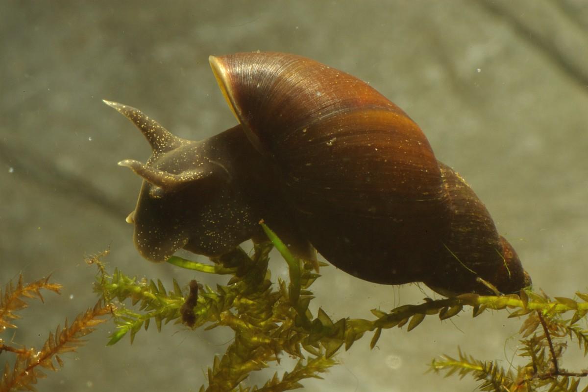 Gastropoda Animals